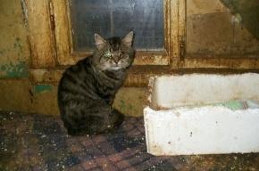 Приют «Ильинка» - кошачий ад