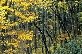 Химкинский лес: Росавтодор возместит вырубленное