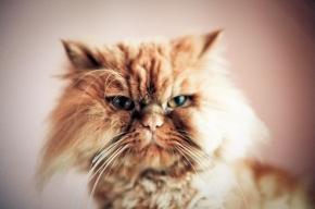 Петербуржцев зовут на выставку-раздачу кошек и собак