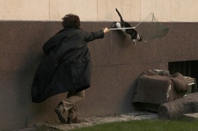 В Эрмитаже ловили кошек