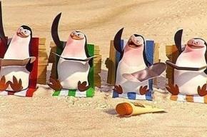 Почему пингвины становятся геями