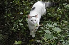 Очаровательный кот ищет любящего хозяина