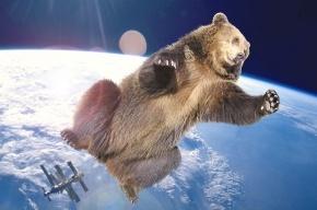 Океанариуму подарили белого медведя
