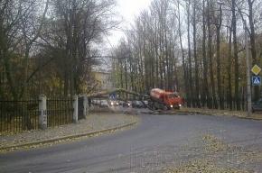 На улице Академика Павлова дерево упало на дорогу