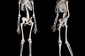 Выставка «Тело человека: мертвые учат живых»: познай себя сам!