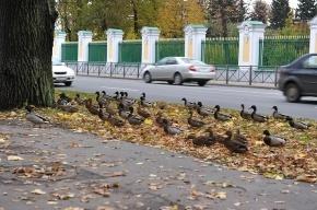 В Петергофе строится элитная зона отдыха