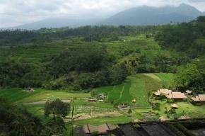 На Бали – эпидемия бешенства