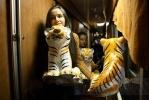 Тигры в Петербурге (ФОТО): Фоторепортаж
