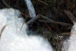 Белая пена на газоне – что это?: Фоторепортаж
