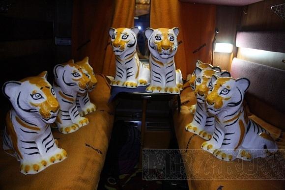 Тигры в Петербурге (ФОТО): Фото