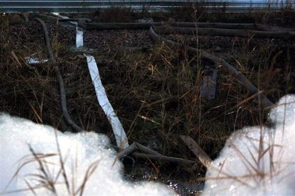 Белая пена на газоне – что это?: Фото