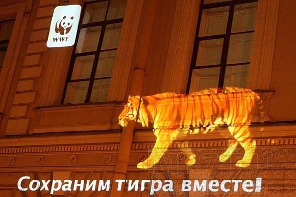 Тигры гуляли по домам и улицам Петербурга: Фото