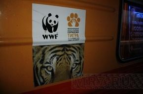 В Мариинском дворце обсуждают, как спасти тигров