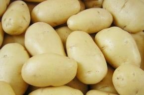 Картофель подорожает: ожидаемая цена - 60 рублей