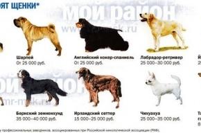 Животное может приносить не только тапочки, но и деньги