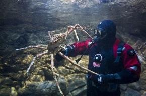 В город приехали гигантские пауки-крабы