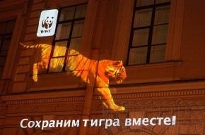 Тигры гуляли по домам и улицам Петербурга