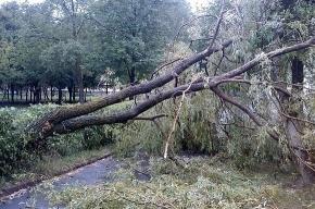 В Петербурге ветер срывает крышу и валит деревья