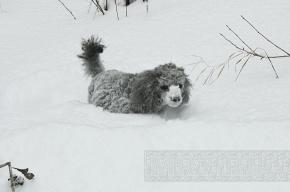 В Россию пришли 50-градусные морозы