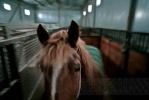 Фоторепортаж: «Как тушили цирк в Автово: фоторепортаж»