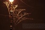 Невский проспект превратили в сказочный лес: Фоторепортаж