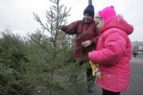 Какой толк в новогодней елке?