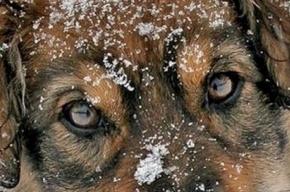 На Будапештской улице замерзает собачья семья