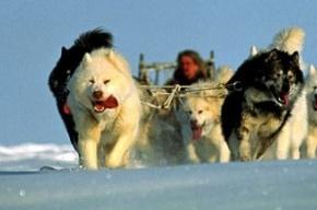 В Павловске пройдут гонки на собачьих упряжках