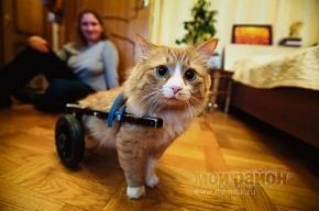Кота Фуську, сломавшего хребет, предлагали усыпить
