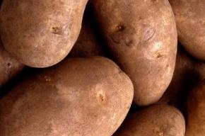 В России кончается картошка
