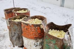 В Курской области сотни тысяч цыплят погибают на морозе