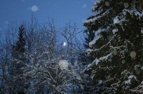 В новогоднюю ночь в Петербурге сильного мороза не будет