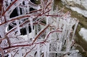 Пять человек пострадали от падения деревьев в Москве