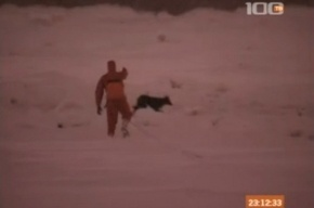 В Петербурге спасли собаку, выбежавшую на лед