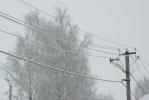 Фоторепортаж: «Провода облепляет снег. Поставьте мобильники на зарядку!»