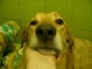 Фоторепортаж: «Жители Петербурга ищут хозяев псу Бонусу, которого живодеры лишили лап»