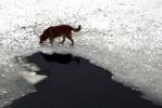 У Сампсониевского моста спасали собаку: Фоторепортаж