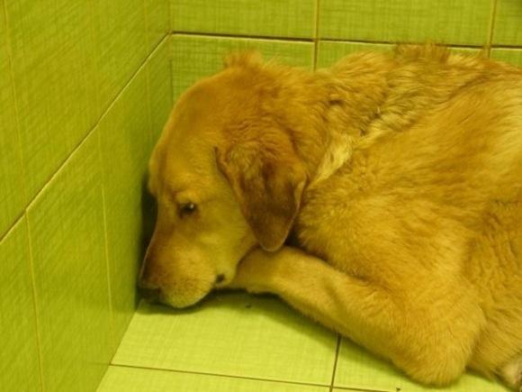 Жители Петербурга ищут хозяев псу Бонусу, которого живодеры лишили лап: Фото
