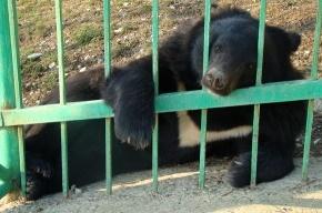 В Приморье в школу забрался медведь-шатун