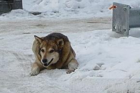 Начинается поголовное уничтожение бездомных животных