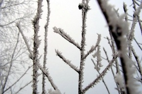 Сегодня ночью ожидаются заморозки