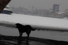 У Сампсониевского моста спасали собаку