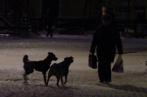 В поселке Володарский снова убивают собак