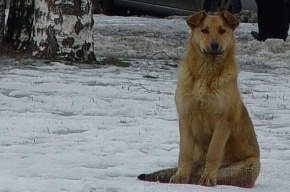 В поселке Володарский начали убивать домашних животных