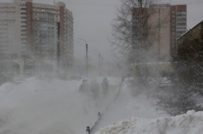 Метель в Петербурге: не улетали только памятники