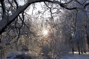 МЧС: В Ленобласти будут морозы до -30