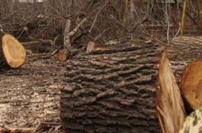 Благоустройство сквера начали с выкорчевывания деревьев