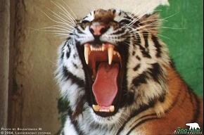 Животные Ленинградского зоопарка «переживают холода с комфортом»