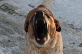 На Обводном канале к прохожим пристают собаки
