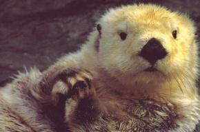 В Ленинградском зоопарке греют ленивца и старых обезьян